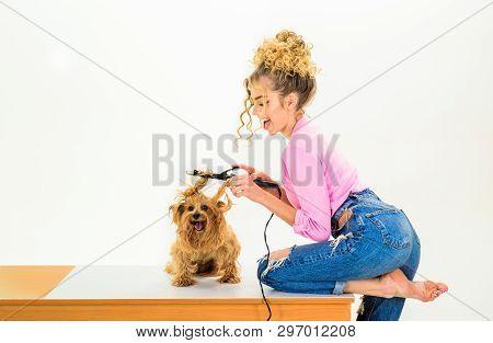 poster of Animal Grooming. Pet Salon. Petshop. Dog Salon. Beauty Salon For Animals. Grooming Master Making Dog