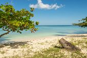 Travel Vacation Tropical Destination. Tropical Tree Beach Landscape. Travel Vacations Destination. T poster