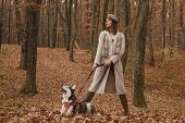 Unconditional Love. Siberian Husky Favorite Pet. Animal Husbandry. Girl Pretty Stylish Woman Walking poster