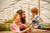 Happy Family. Happy Family In Greenhouse. Happy Family Day. Happy Family With Little Son In Orangery poster