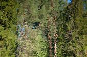 Abstract Background: Reflection Of The Forest In The Lake. Summer Green Leaves Reflecting In A Pond. poster