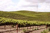 Idillyc Vineyards On Small Slopes
