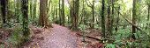 Panoramic view of trail in forest