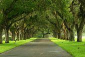 Spanish Moss Pathway