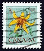 Postage stamp Canada 1977 Canada Lily, Lilium Canadense, Flower