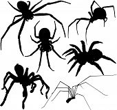 stock photo of huntsman spider  - Creepy spider vector silhouette on white background - JPG