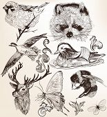 stock photo of raccoon  - Collection of high detailed vector animals for design - JPG