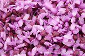 Closeup Of Pink Blossoms