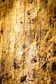 Wood Damaged By Bark Beetle