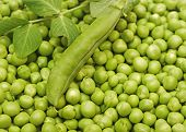 stock photo of peas  - Green peas and green pea pods as a background  - JPG