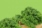 Fresh kale cabbage on a green background with copy space