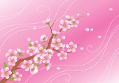 pic of cherry blossom  - Blossoming branch with flying petals on a pink background - JPG