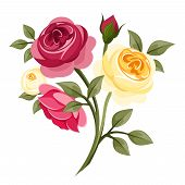 picture of english rose  - Vector red - JPG
