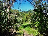 Hiking Track Through Native Bushland