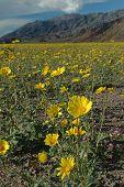 Desert Spring