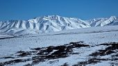 image of denali national park  - The mountains and fields of Alaska - JPG