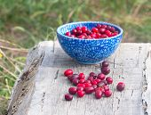 Blue Full  Plate Cornelian Cherries