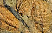 view of the old prehistory Fossils - Trilobite