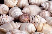 collection of various colorful seashells on white background