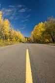 Empty road through autumn forest, Minnesota