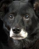 Intense Old Dog
