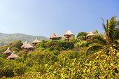 Rustic Huts In The Jungle