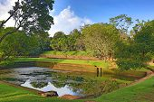Ancient swimming pool in jungle. Sigiriya, Sri Lanka