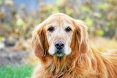 picture of cute animal face  - a cute dog in the grass at a park during summer - JPG