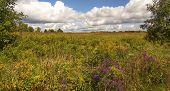 pic of goldenrod  - Beautiful fall day with blooming Goldenrod and purple Asters and a beautiful blue sky with cumulus clouds - JPG