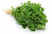 picture of fenugreek  - methi - JPG