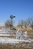 picture of pecan tree  - Farm sprinkler left on in the winter and frozen to the ground with ice - JPG