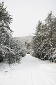 Path With Snow