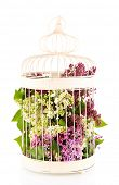 Beautiful lilac flowers in decorative cell, isolated on white