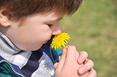 The Boy Sniffs A Dandelion