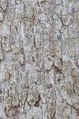 Tree bark pattern Texture wood And Background