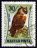 Postage Stamp Hungary 1962 Eurasian Eagle Owl