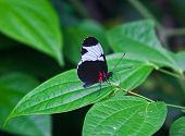 The Butterfly. A Beautiful Butterfly Sitting In The Tree