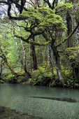 Clear river in Fiordland National Park, South Island, New Zealand