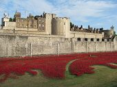 LONDON- AUGUST 7: 888,246 ceramic poppies, by artist Paul Cummins, where laid around the tower of lo
