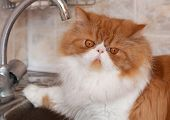 Red cat with water droplets on a muzzle