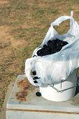 Big Blackberries