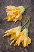 Squash Blossoms Or Pumpkin Flowers