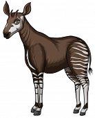 Illustration of a close up okapi