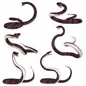 Snake - Anaconda
