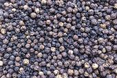 Dried Turkey Berry background