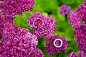 wedding rings on Showy Stonecrop