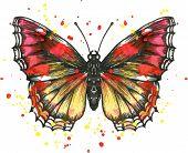Vector butterfly in watercolor