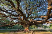 Under the old big giant tree