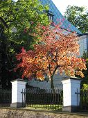 picture of enlightenment  - colorful tree in the garden enlightened from behind - JPG