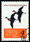 Vintage  Postage Stamp. Red-breasted Geese.